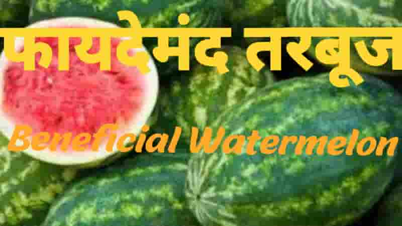 फायदेमंद तरबूज Beneficial Watermelon