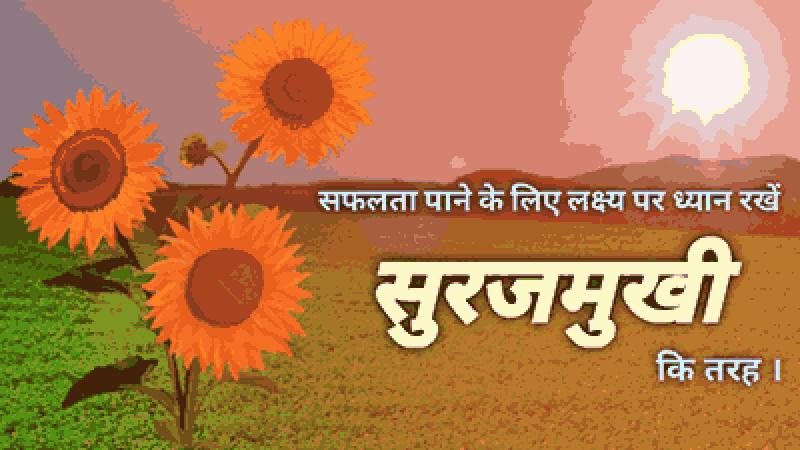 सफलता का राज सुरजमुखी से सिखें !! LEARN THE SECRET OF SUCCESS FROM SUNFLOWER !!