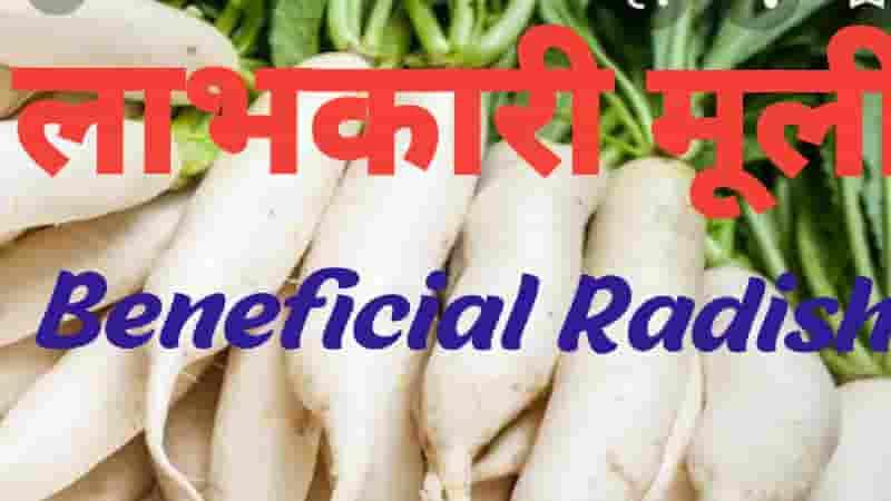 लाभकारी मूली Beneficial Radish